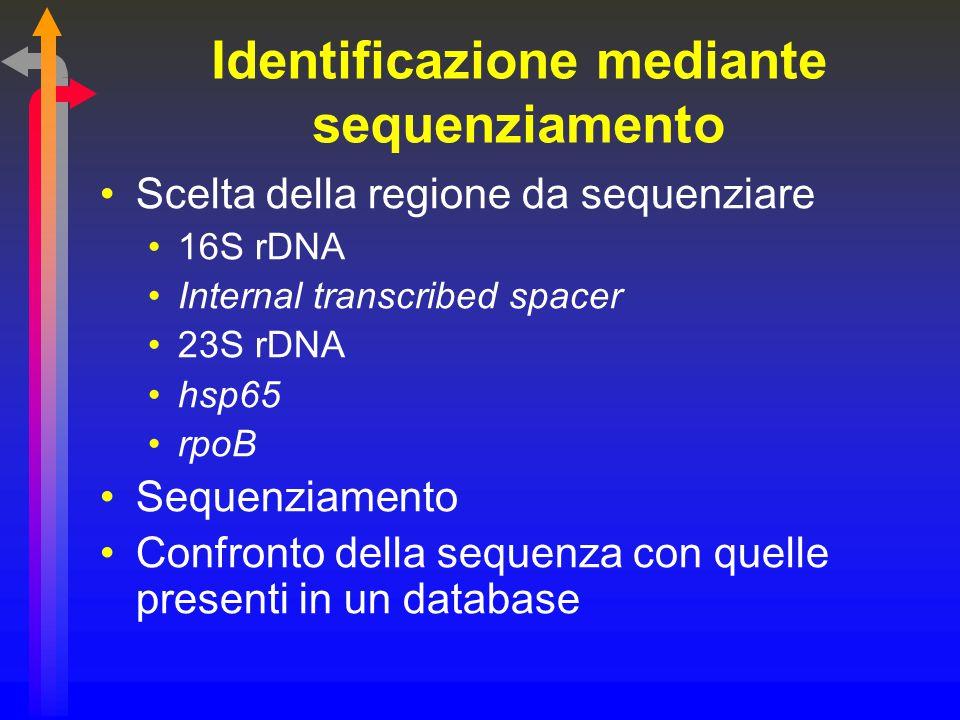 Identificazione mediante sequenziamento Scelta della regione da sequenziare 16S rDNA Internal transcribed spacer 23S rDNA hsp65 rpoB Sequenziamento Co