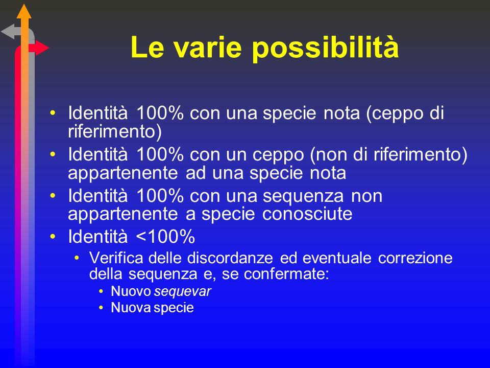 Le varie possibilità Identità 100% con una specie nota (ceppo di riferimento) Identità 100% con un ceppo (non di riferimento) appartenente ad una spec