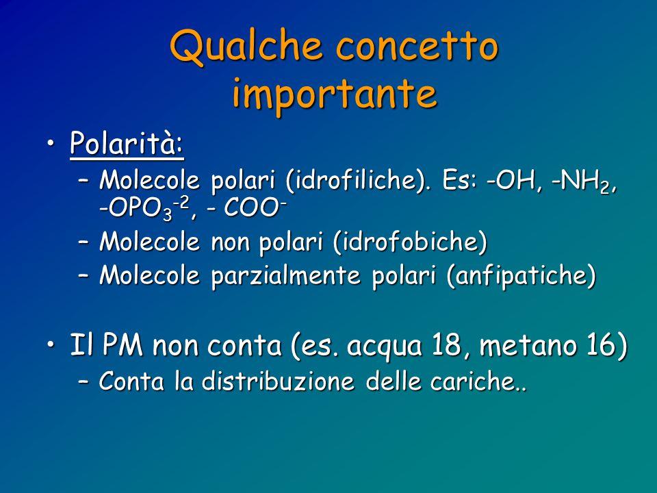 Qualche concetto importante Polarità:Polarità: –Molecole polari (idrofiliche).