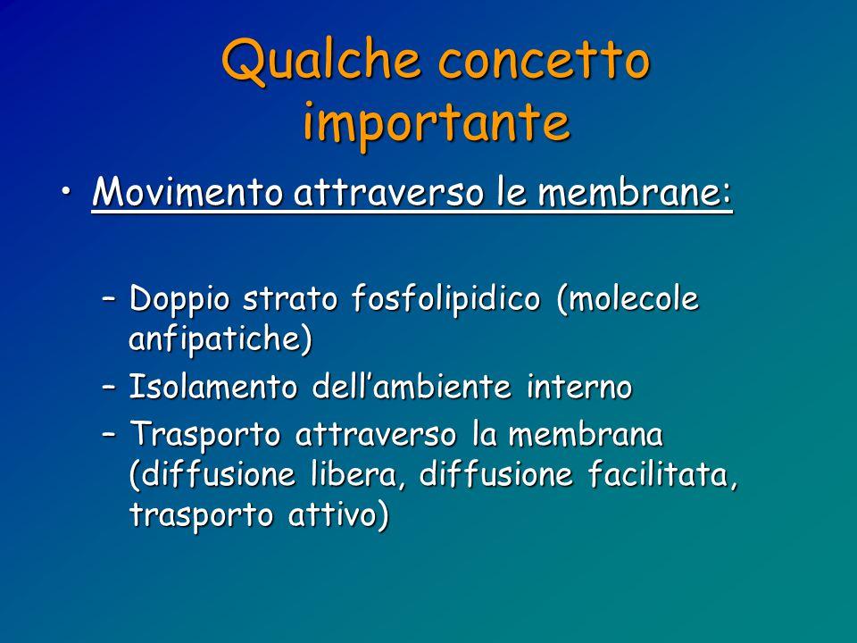 Qualche concetto importante Movimento attraverso le membrane:Movimento attraverso le membrane: –Doppio strato fosfolipidico (molecole anfipatiche) –Isolamento dell'ambiente interno –Trasporto attraverso la membrana (diffusione libera, diffusione facilitata, trasporto attivo)