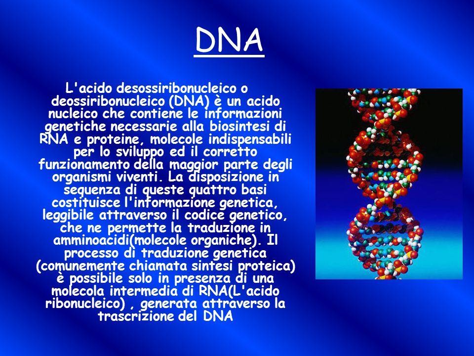 DNA L acido desossiribonucleico o deossiribonucleico (DNA) è un acido nucleico che contiene le informazioni genetiche necessarie alla biosintesi di RNA e proteine, molecole indispensabili per lo sviluppo ed il corretto funzionamento della maggior parte degli organismi viventi.
