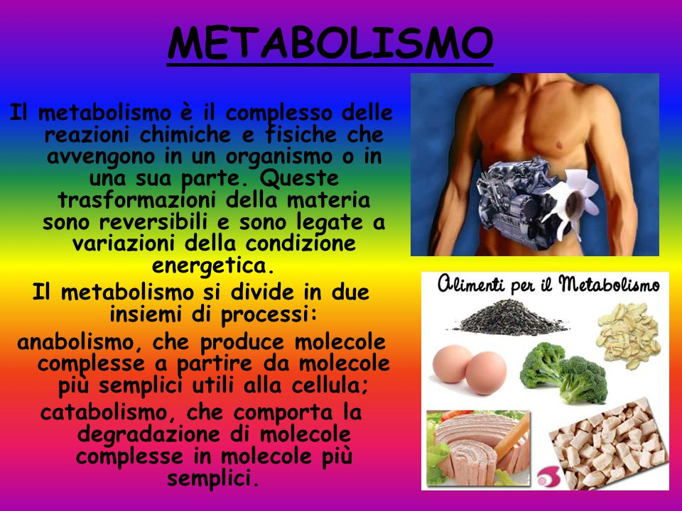 METABOLISMO Il metabolismo è il complesso delle reazioni chimiche e fisiche che avvengono in un organismo o in una sua parte.