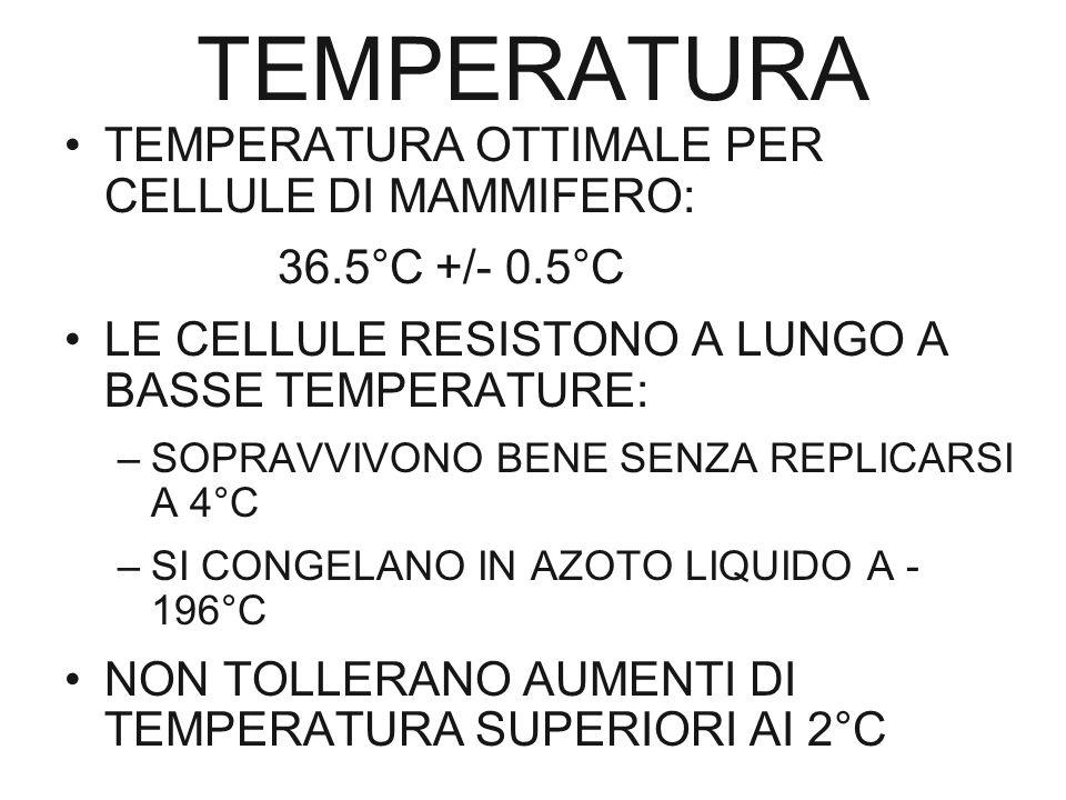TEMPERATURA TEMPERATURA OTTIMALE PER CELLULE DI MAMMIFERO: 36.5°C +/- 0.5°C LE CELLULE RESISTONO A LUNGO A BASSE TEMPERATURE: –SOPRAVVIVONO BENE SENZA