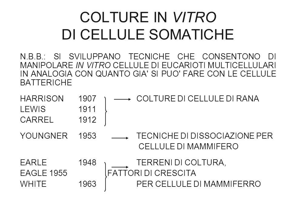 COLTURE IN VITRO DI CELLULE SOMATICHE N.B.B.: SI SVILUPPANO TECNICHE CHE CONSENTONO DI MANIPOLARE IN VITRO CELLULE DI EUCARIOTI MULTICELLULARI IN ANAL