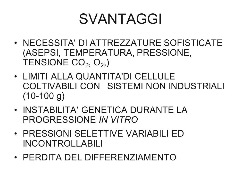 SVANTAGGI NECESSITA' DI ATTREZZATURE SOFISTICATE (ASEPSI, TEMPERATURA, PRESSIONE, TENSIONE CO 2, O 2,) LIMITI ALLA QUANTITA'DI CELLULE COLTIVABILI CON