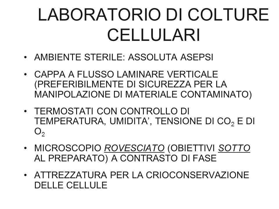 LABORATORIO DI COLTURE CELLULARI AMBIENTE STERILE: ASSOLUTA ASEPSI CAPPA A FLUSSO LAMINARE VERTICALE (PREFERIBILMENTE DI SICUREZZA PER LA MANIPOLAZION