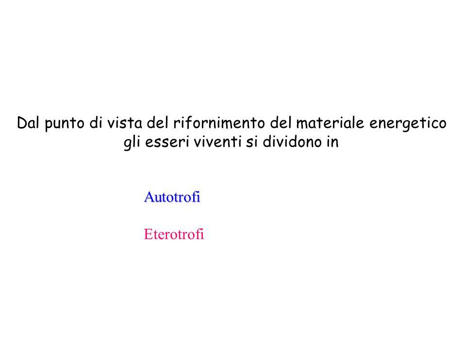 Dal punto di vista del rifornimento del materiale energetico gli esseri viventi si dividono in Autotrofi Eterotrofi