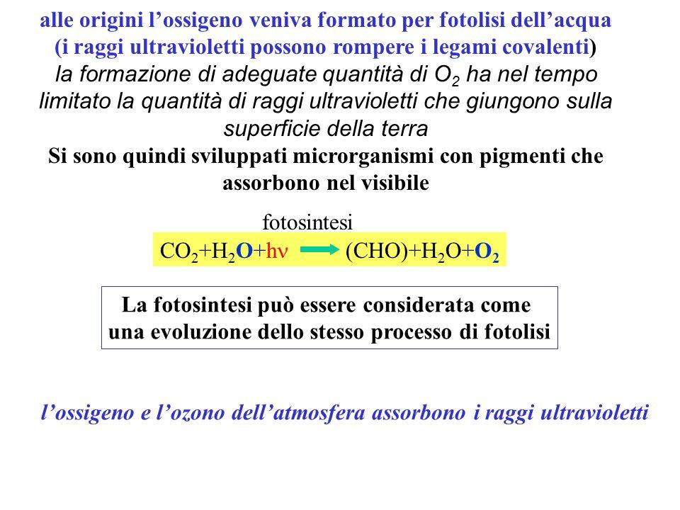 CO 2 +H 2 O+h (CHO)+H 2 O+O 2 alle origini l'ossigeno veniva formato per fotolisi dell'acqua (i raggi ultravioletti possono rompere i legami covalenti) la formazione di adeguate quantità di O 2 ha nel tempo limitato la quantità di raggi ultravioletti che giungono sulla superficie della terra Si sono quindi sviluppati microrganismi con pigmenti che assorbono nel visibile La fotosintesi può essere considerata come una evoluzione dello stesso processo di fotolisi l'ossigeno e l'ozono dell'atmosfera assorbono i raggi ultravioletti fotosintesi