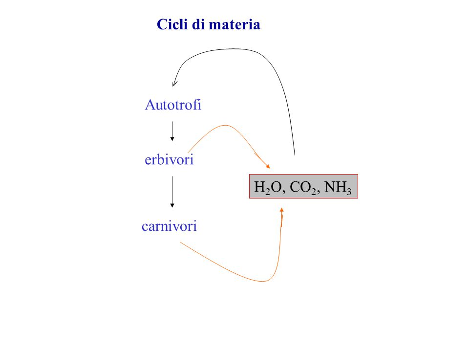 Autotrofi erbivori carnivori H 2 O, CO 2, NH 3 Cicli di materia