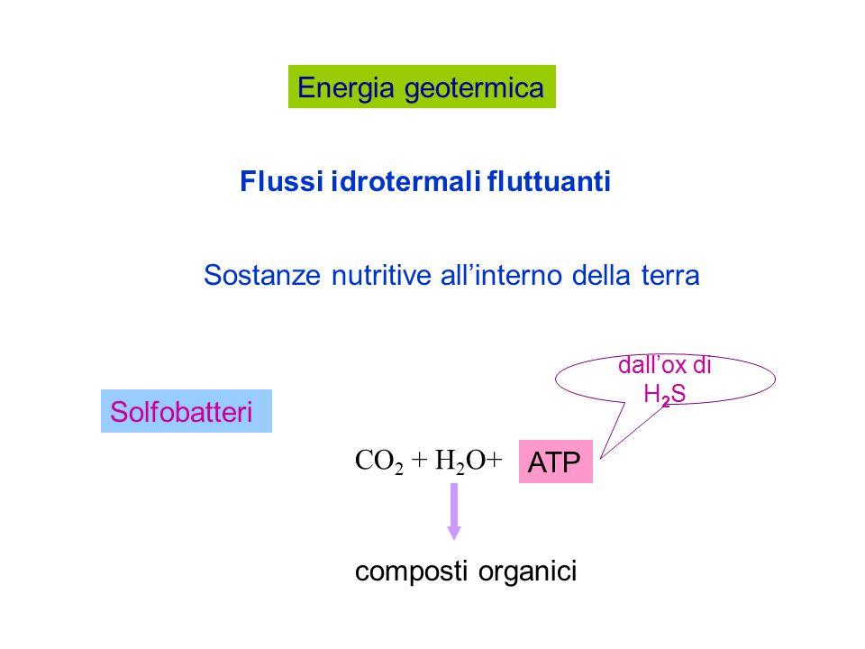 Energia geotermica Sostanze nutritive all'interno della terra Flussi idrotermali fluttuanti Solfobatteri CO 2 + H 2 O+ composti organici ATP dall'ox di H 2 S