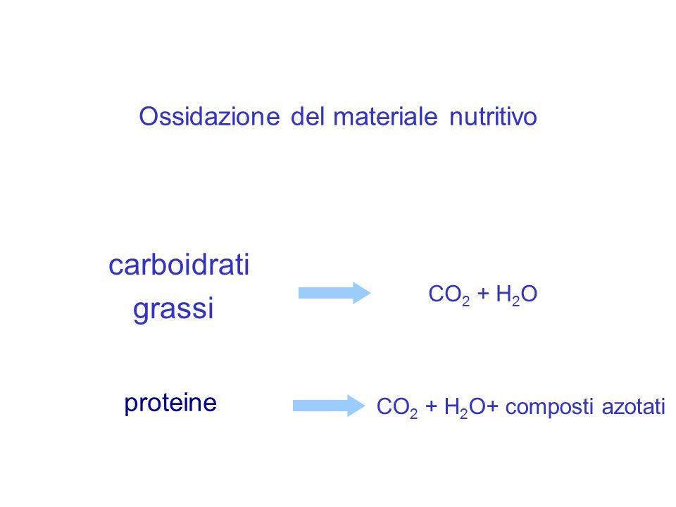 Ossidazione del materiale nutritivo carboidrati grassi CO 2 + H 2 O proteine CO 2 + H 2 O+ composti azotati