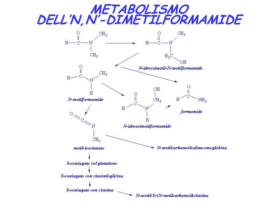 METABOLISMO DELL'N,N'-DIMETILFORMAMIDE