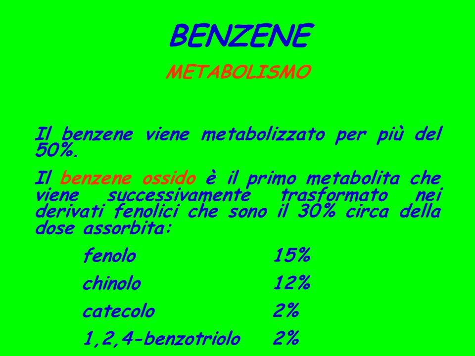 BENZENE METABOLISMO Il benzene viene metabolizzato per più del 50%. Il benzene ossido è il primo metabolita che viene successivamente trasformato nei