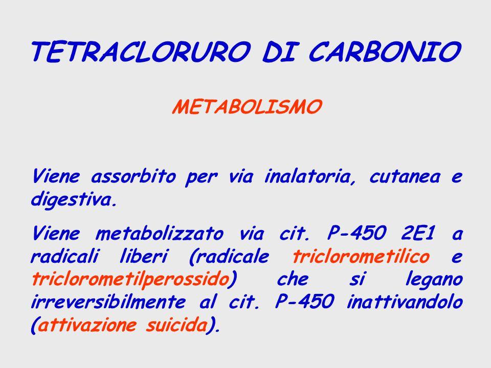 TETRACLORURO DI CARBONIO METABOLISMO Viene assorbito per via inalatoria, cutanea e digestiva. Viene metabolizzato via cit. P-450 2E1 a radicali liberi