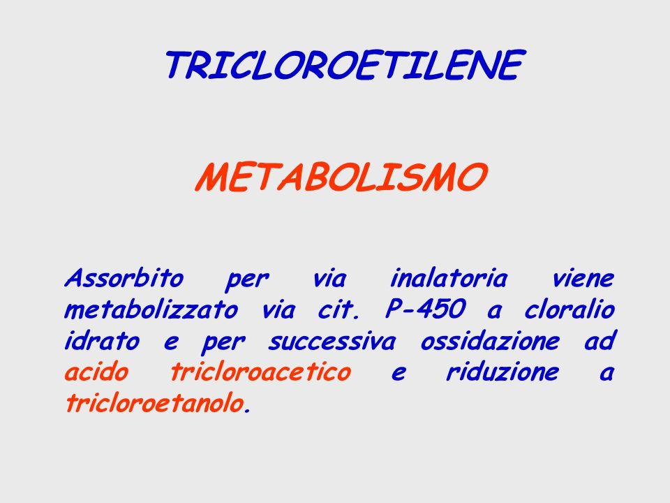 TRICLOROETILENE METABOLISMO Assorbito per via inalatoria viene metabolizzato via cit. P-450 a cloralio idrato e per successiva ossidazione ad acido tr