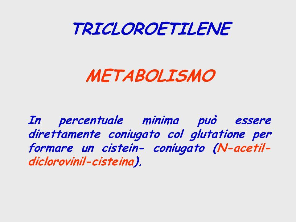 TRICLOROETILENE METABOLISMO In percentuale minima può essere direttamente coniugato col glutatione per formare un cistein- coniugato (N-acetil- diclorovinil-cisteina).