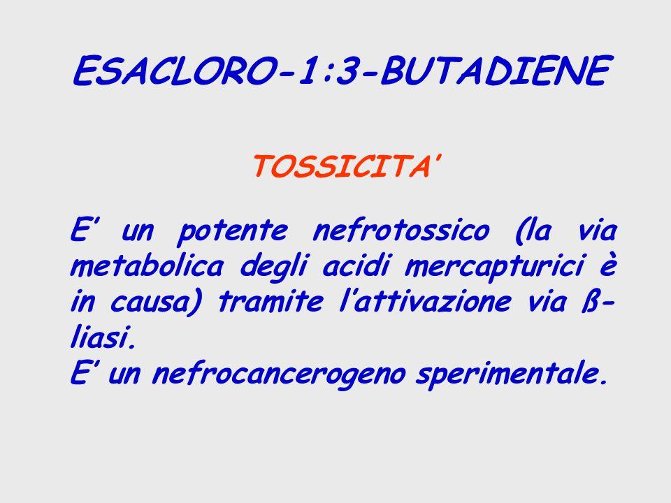 ESACLORO-1:3-BUTADIENE TOSSICITA' E' un potente nefrotossico (la via metabolica degli acidi mercapturici è in causa) tramite l'attivazione via ß- liasi.
