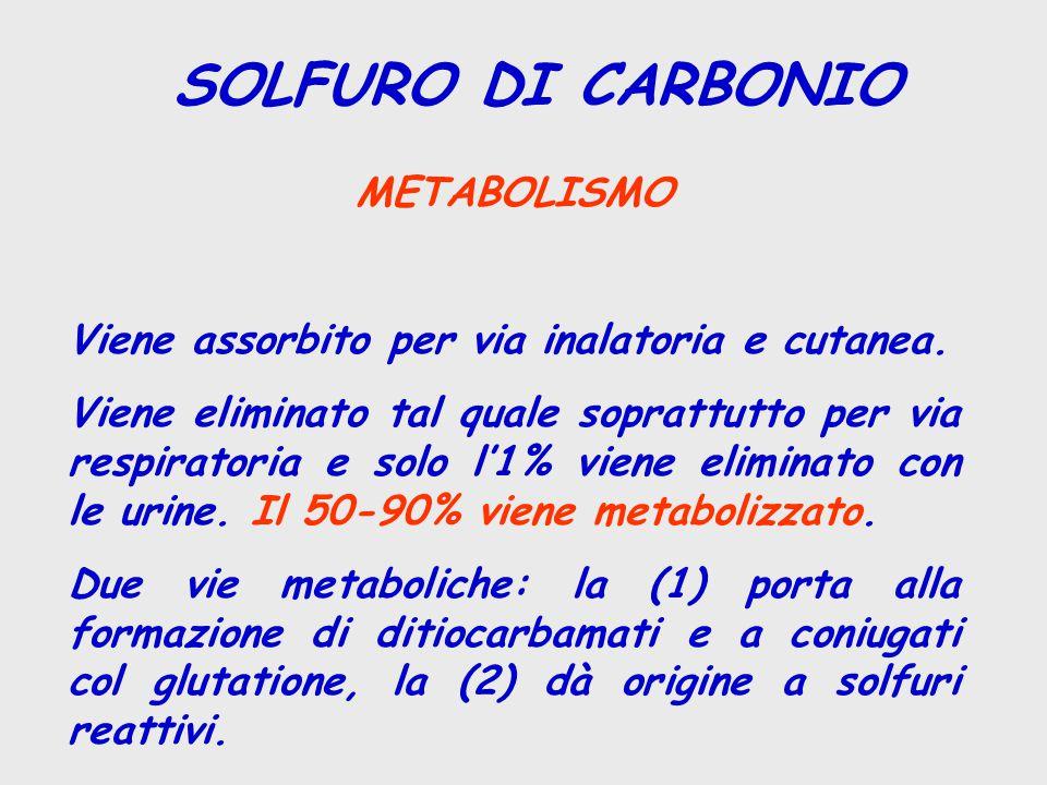 SOLFURO DI CARBONIO METABOLISMO Viene assorbito per via inalatoria e cutanea. Viene eliminato tal quale soprattutto per via respiratoria e solo l'1% v