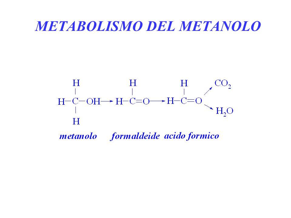 METABOLISMO DEL METANOLO
