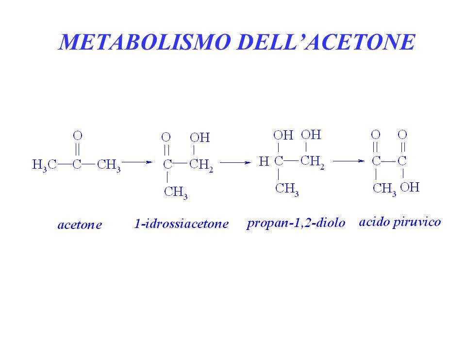 METABOLISMO DELL'ACETONE