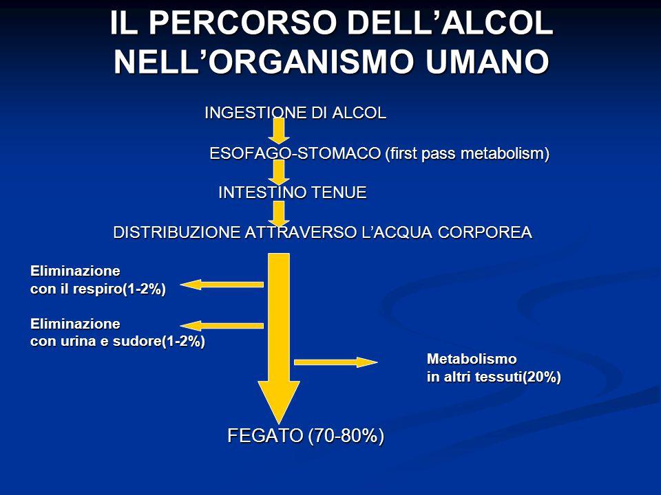 IL PERCORSO DELL'ALCOL NELL'ORGANISMO UMANO INGESTIONE DI ALCOL INGESTIONE DI ALCOL ESOFAGO-STOMACO (first pass metabolism) ESOFAGO-STOMACO (first pas