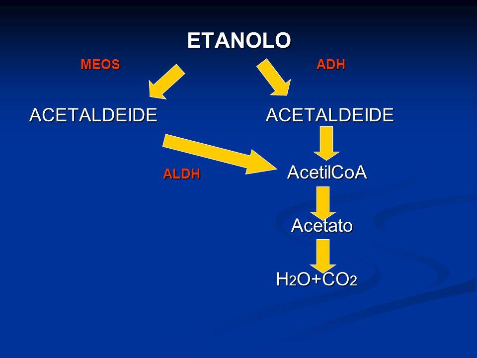 ETANOLO MEOS ADH MEOS ADH ACETALDEIDE ACETALDEIDE ALDH AcetilCoA ALDH AcetilCoA Acetato Acetato H 2 O+CO 2 H 2 O+CO 2