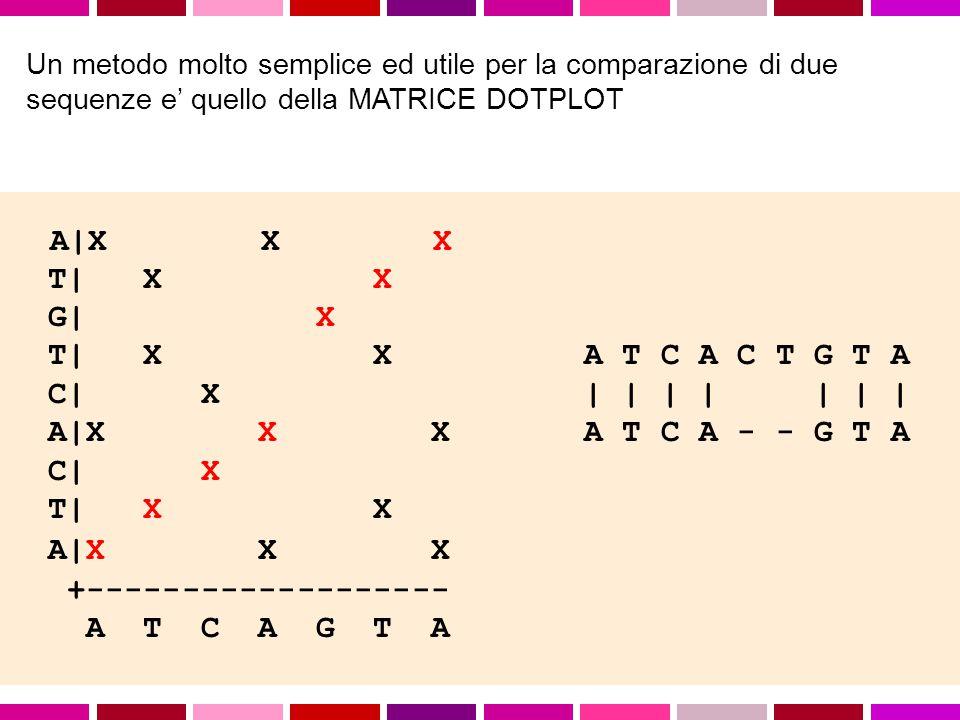 11 AACCGAAGGACTTTAATC AAGGCCTAACCCCTTTGTCC AA..CCGAAGGACTTTAATC AACCGAAGGACT TTAATC || |..||...||||...| | |||.|| ||..|| AAGGCTAAACCCCTTTGTCC A AGGCCTAACCCCTTTGTC Fattibile solo per poche sequenze molto brevi.