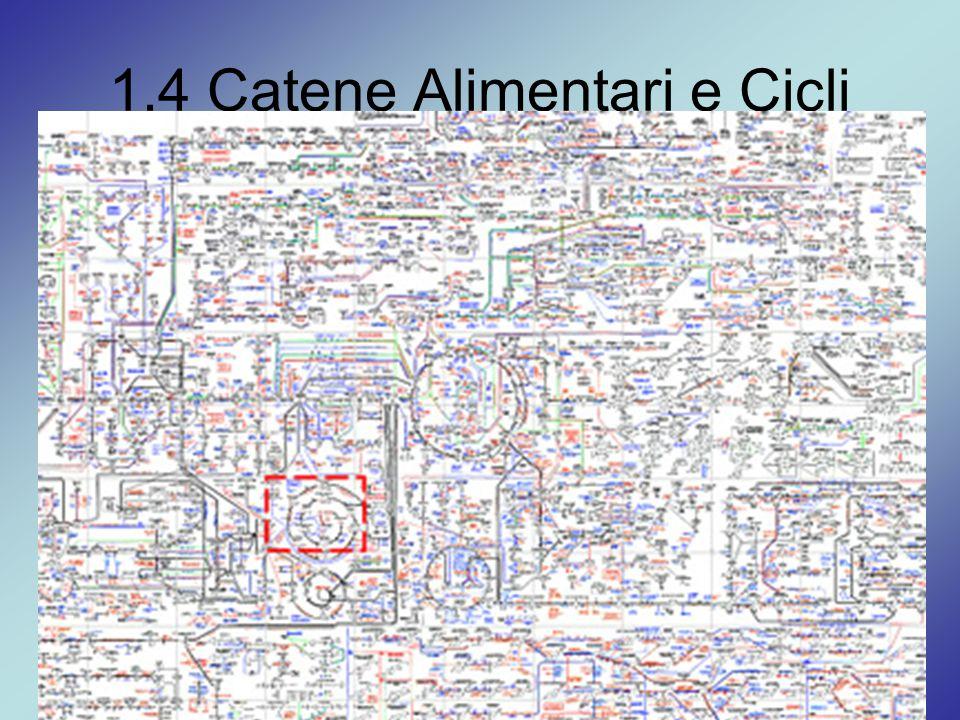 1.4 Catene Alimentari e Cicli Metabolismo = Catabolismo + Anabolismo Organismo vivente