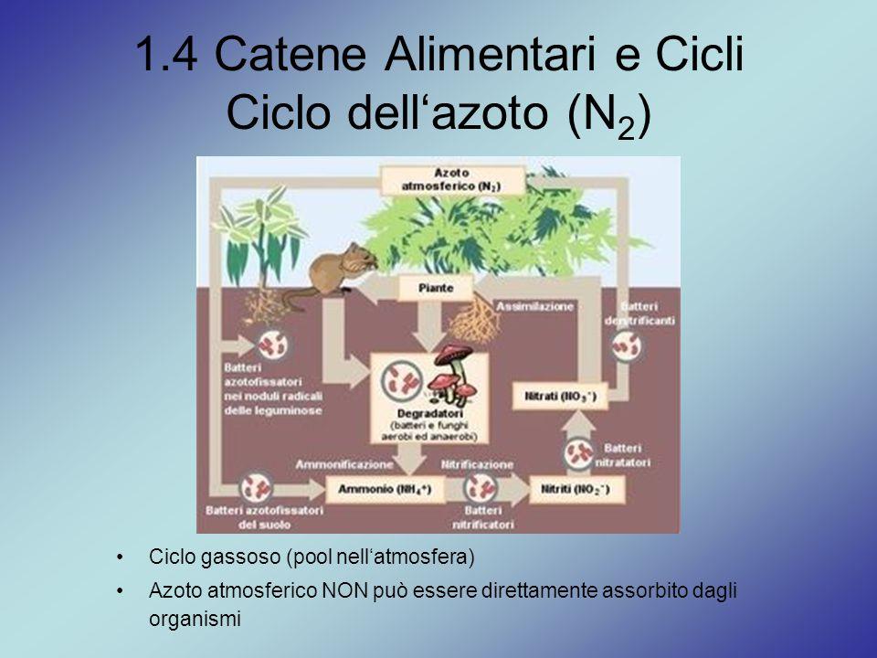 1.4 Catene Alimentari e Cicli Ciclo dell'azoto (N 2 ) Ciclo gassoso (pool nell'atmosfera) Azoto atmosferico NON può essere direttamente assorbito dagl
