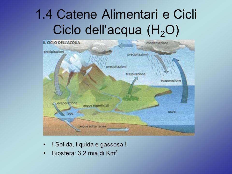 1.4 Catene Alimentari e Cicli Ciclo dell'acqua (H 2 O) ! Solida, liquida e gassosa ! Biosfera: 3.2 mia di Km 3