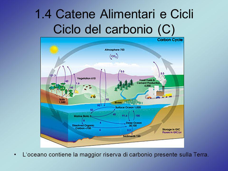 1.4 Catene Alimentari e Cicli Ciclo del carbonio (C) L'oceano contiene la maggior riserva di carbonio presente sulla Terra.
