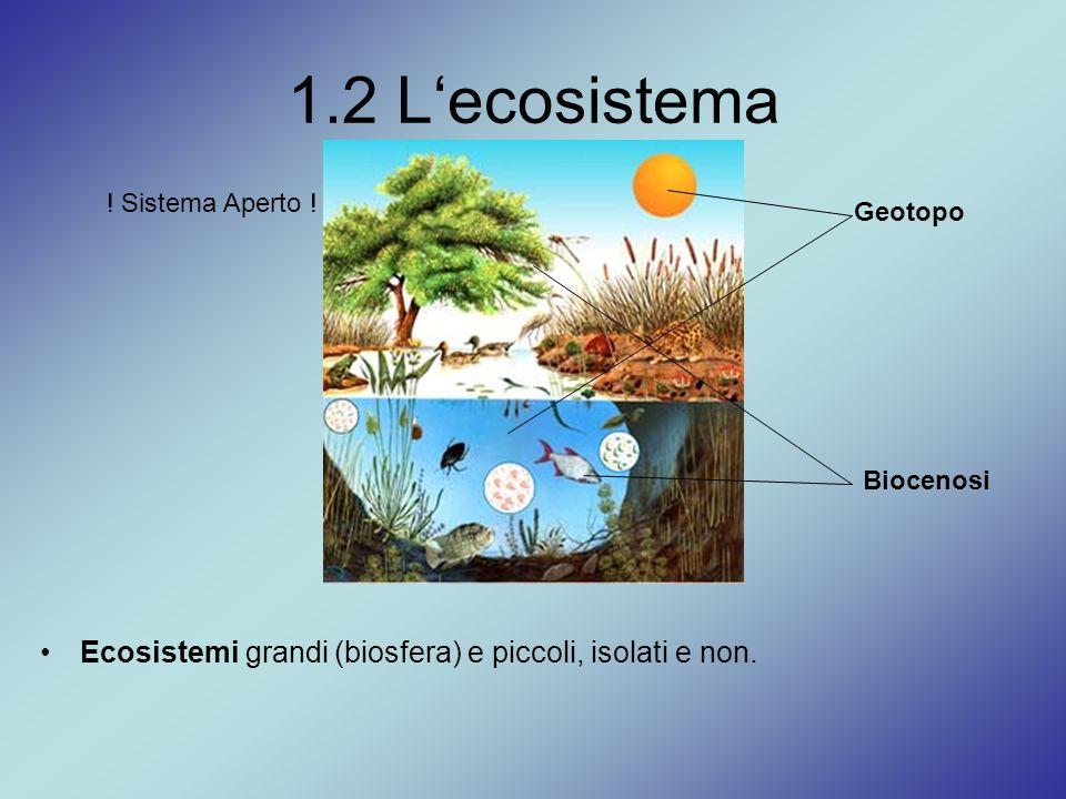 1.2 L'ecosistema Ecosistemi grandi (biosfera) e piccoli, isolati e non. ! Sistema Aperto ! Biocenosi Geotopo