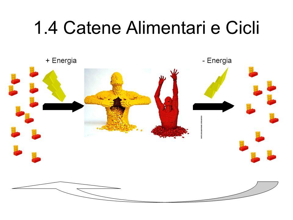 1.4 Catene Alimentari e Cicli + Energia- Energia