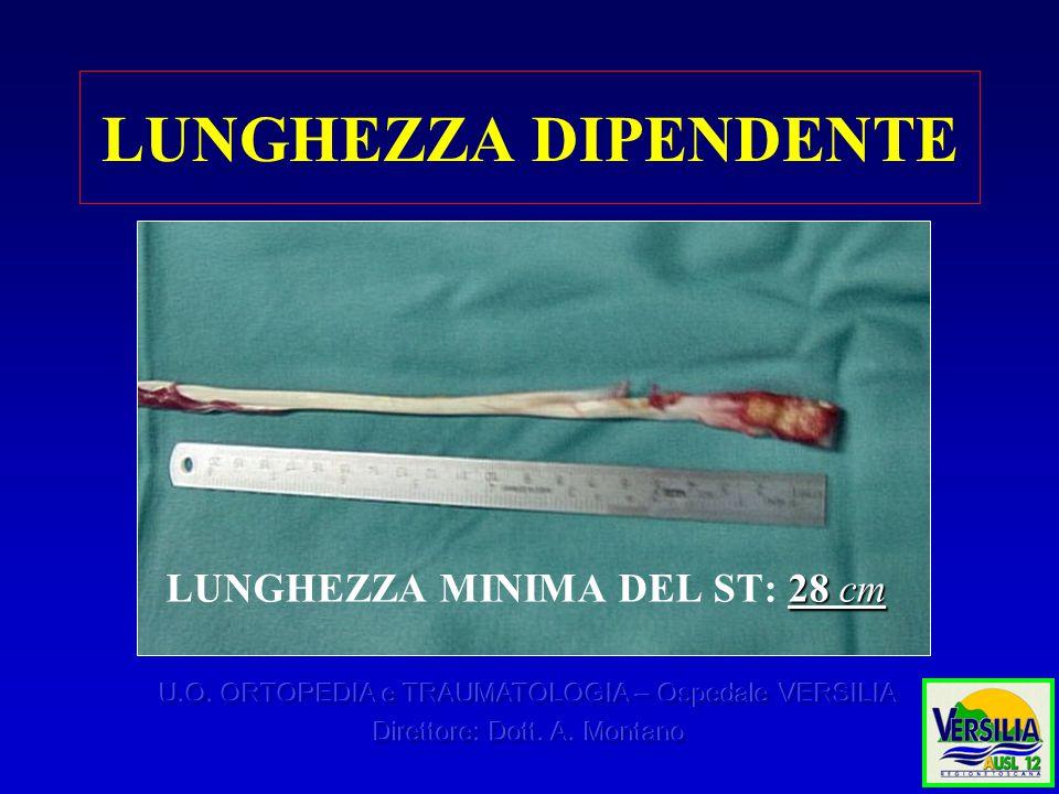 LUNGHEZZA DIPENDENTE 28 cm LUNGHEZZA MINIMA DEL ST: 28 cm