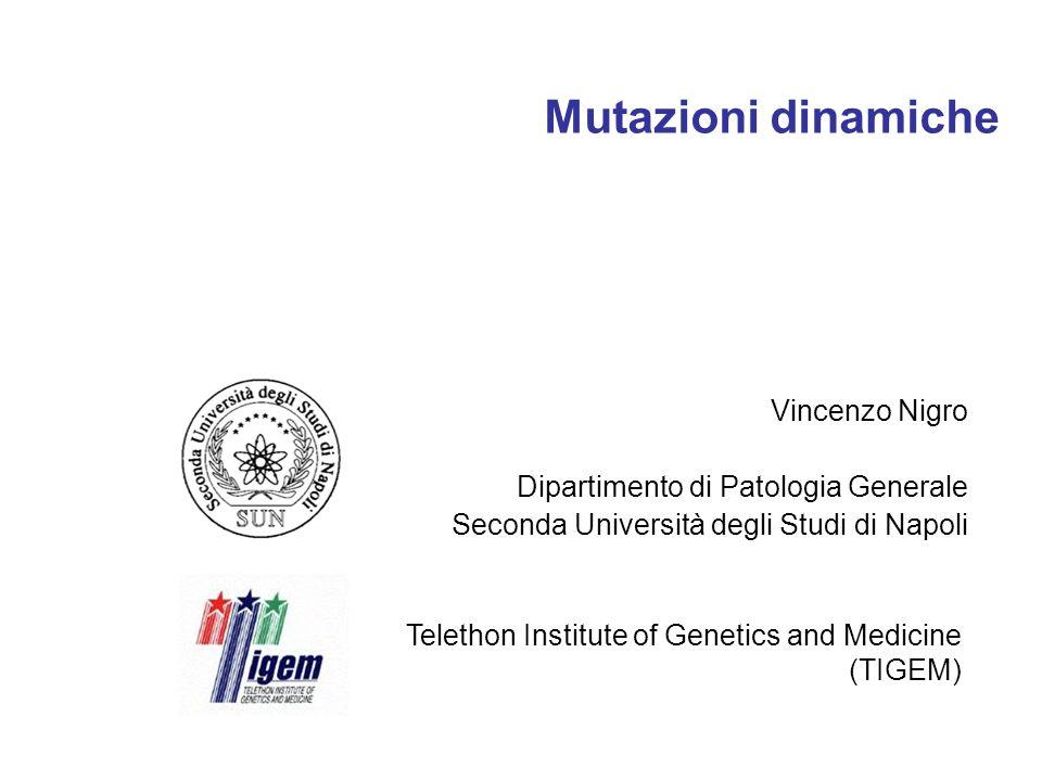 Mutazioni dinamiche Vincenzo Nigro Dipartimento di Patologia Generale Seconda Università degli Studi di Napoli Telethon Institute of Genetics and Medi