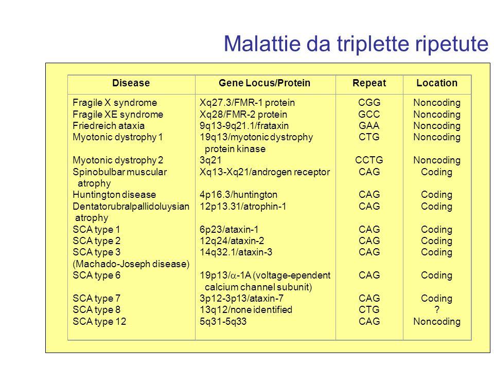 Malattie da triplette ripetute DiseaseGene Locus/ProteinRepeatLocation Fragile X syndrome Fragile XE syndrome Friedreich ataxia Myotonic dystrophy 1 M