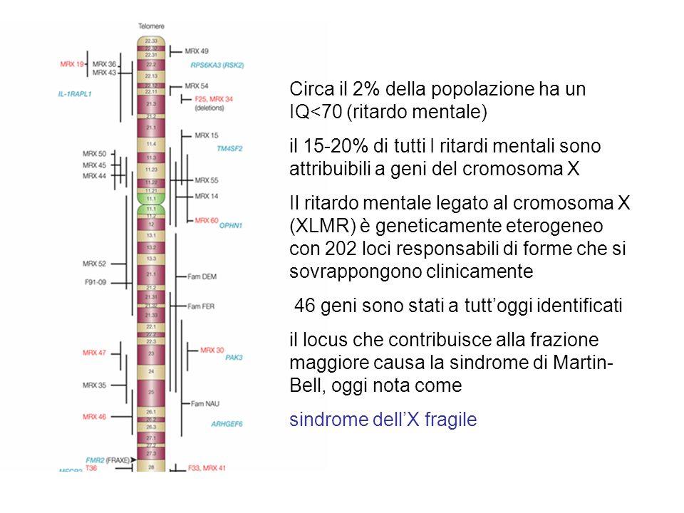 Premutazioni e mutazioni Le premutazioni si espandono quando sono trasmesse dalla madre La donna con premutazioni ha un maggiore rischio di menopausa precoce POF (premature ovarian failure) Il più corto allele descritto che in una sola generazione è diventato mutazione piena è di 59 triplette Espansione stabile (CGG) 9 -AGG-(CGG) 9 -AGG-(CGG) 9 Ha almeno 2 A che interrompono la serie di 9 triplette Espansione instabile (CGG) 9 -(CGG) 9 -(CGG) 9- (CGG) 9…… NON ha A che interrompono la serie