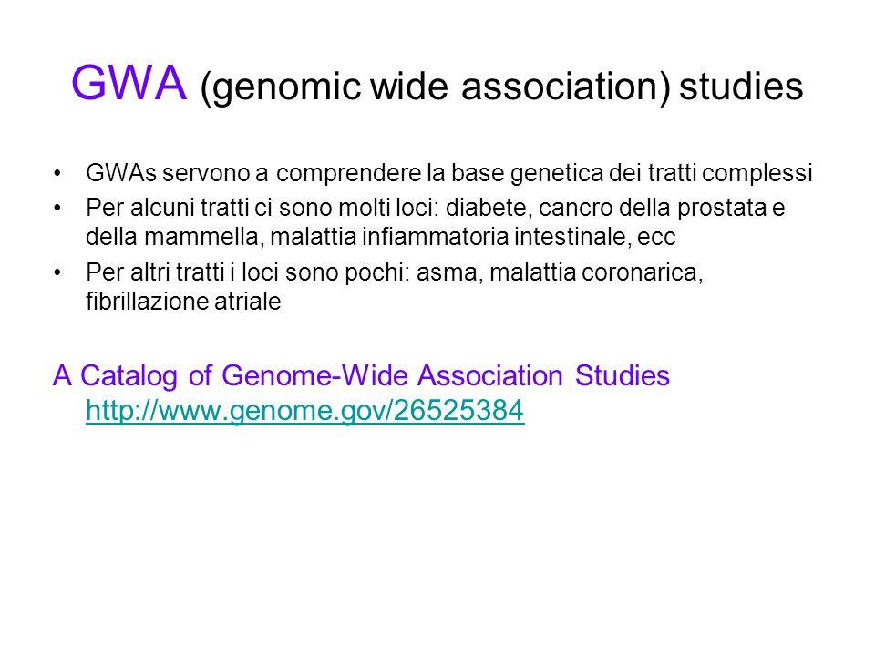GWA (genomic wide association) studies GWAs servono a comprendere la base genetica dei tratti complessi Per alcuni tratti ci sono molti loci: diabete, cancro della prostata e della mammella, malattia infiammatoria intestinale, ecc Per altri tratti i loci sono pochi: asma, malattia coronarica, fibrillazione atriale A Catalog of Genome-Wide Association Studies http://www.genome.gov/26525384 http://www.genome.gov/26525384