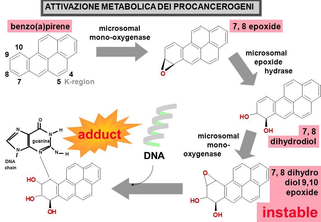 7, 8 dihydrodiol OH OH O ATTIVAZIONE METABOLICA DEI PROCANCEROGENI benzo(a)pirene7, 8 epoxide DNA OH OH OH N N N N O guanina N H H DNA chain 8 7 9 10 4 5 K-region microsomal mono-oxygenase microsomal epoxide hydrase microsomal mono- oxygenase 7, 8 dihydro diol 9,10 epoxide instable OH OH O adduct