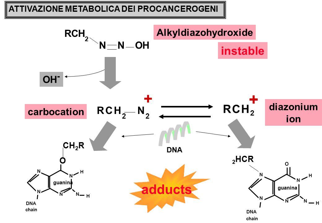 ATTIVAZIONE METABOLICA DEI PROCANCEROGENI Alkyldiazohydroxide N RCH 2 NOH RCH 2 + RCH 2 N 2 + instable diazonium ion carbocation N N N N O guanina N H H DNA chain CH 2 R N N N N O guanina N H H DNA chain 2 HCR DNA OH - adducts