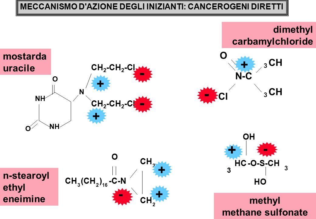 MECCANISMO D AZIONE DEGLI INIZIANTI: CANCEROGENI DIRETTI mostarda uracile methyl methane sulfonate n-stearoyl ethyl eneimine dimethyl carbamylchloride O N O NH CH 2 -CH 2 -Cl - - + + Cl O CH 3 3 N-C - + -O-S-CH 3 O OH HC 3 HO - + O CH 3 (CH 2 ) 16 -C-N CH 2 2 - + +