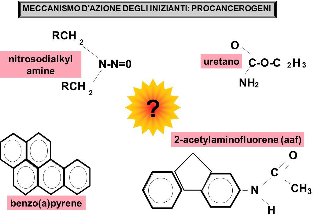 N-N=0 RCH 2 2 nitrosodialkyl amine H O C CH 3 N uretano NH 2 O C-O-C 2 H 3 MECCANISMO D AZIONE DEGLI INIZIANTI: PROCANCEROGENI 2-acetylaminofluorene (aaf) benzo(a)pyrene ?