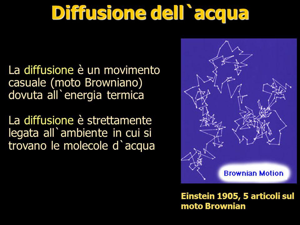 Nei tessuti la diffusività dell`acqua è condizionata dalla composizione dall`ambiente cellulare Se le membrane delle cellule sono disposte con direzionalità coerente la diffusione sarà anisotropica Diffusione dell`acqua