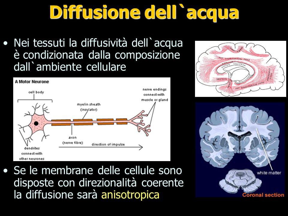 Isotropia Anisotropia Fibre sostanza bianca MRI: Diffusione dell`acqua