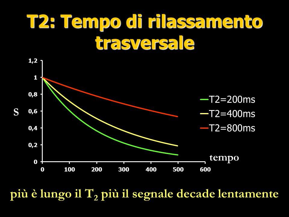 Quantificazione assoluta III TE Ampiezza del segnale T2 Metaboliti T2 Acqua Decadimento acqua