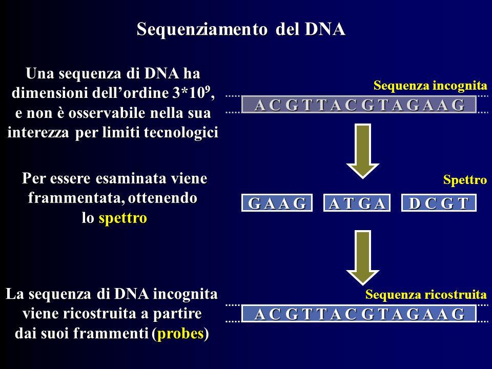 Sequenziamento del DNA Una sequenza di DNA ha dimensioni dell'ordine 3*10 9, e non è osservabile nella sua interezza per limiti tecnologici A C G T T A C G T A G A A G Per essere esaminata viene frammentata, ottenendo lo spettro G A A G A T G A D C G T La sequenza di DNA incognita viene ricostruita a partire dai suoi frammenti (probes) A C G T T A C G T A G A A G Sequenza incognita Spettro Sequenza ricostruita
