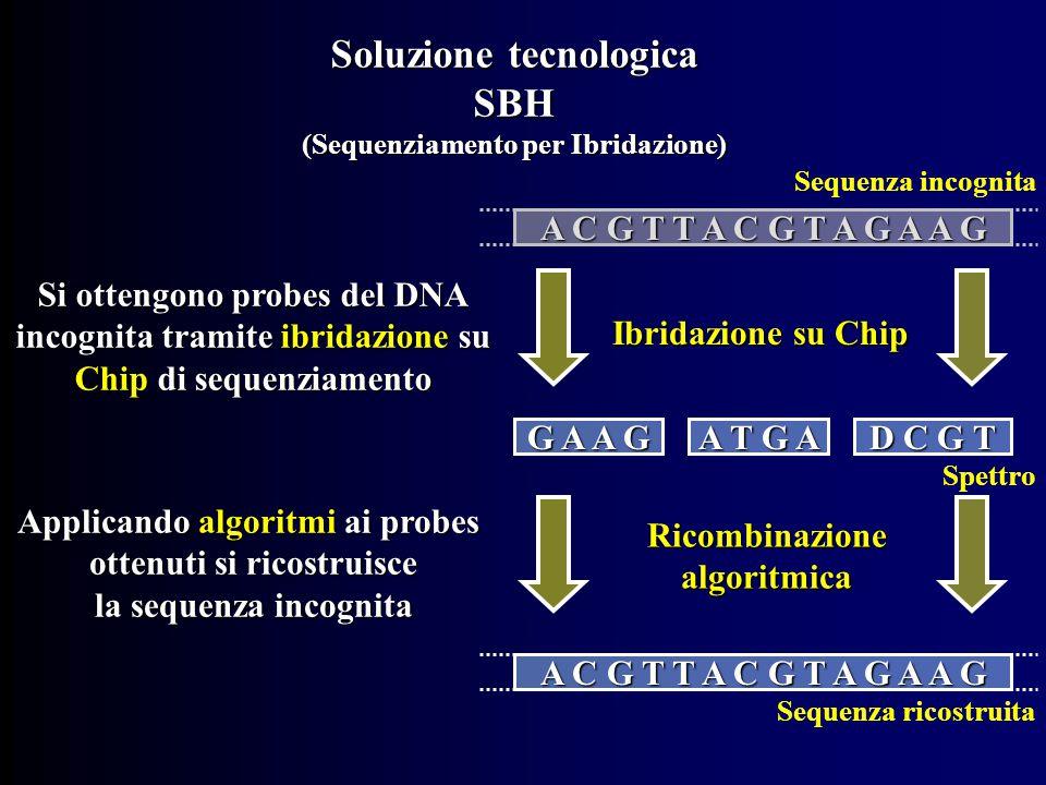 Soluzione tecnologica SBH (Sequenziamento per Ibridazione) A C G T T A C G T A G A A G G A A G A T G A D C G T A C G T T A C G T A G A A G Ibridazione su Chip Si ottengono probes del DNA incognita tramite ibridazione su Chip di sequenziamento Ricombinazione algoritmica Applicando algoritmi ai probes ottenuti si ricostruisce la sequenza incognita Sequenza incognita Spettro Sequenza ricostruita