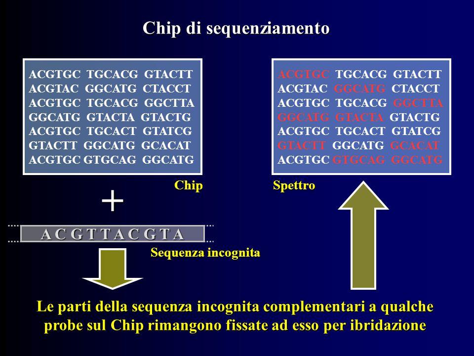 Chip di sequenziamento ACGTGC TGCACG GTACTT ACGTAC GGCATG CTACCT ACGTGC TGCACG GGCTTA GGCATG GTACTA GTACTG ACGTGC TGCACT GTATCG GTACTT GGCATG GCACAT ACGTGC GTGCAG GGCATG Chip + A C G T T A C G T A Sequenza incognita Le parti della sequenza incognita complementari a qualche probe sul Chip rimangono fissate ad esso per ibridazione ACGTGC TGCACG GTACTT ACGTAC GGCATG CTACCT ACGTGC TGCACG GGCTTA GGCATG GTACTA GTACTG ACGTGC TGCACT GTATCG GTACTT GGCATG GCACAT ACGTGC GTGCAG GGCATG Spettro