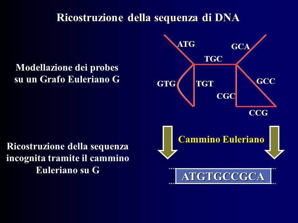ATG TGTGTG TGC GCA CGC GCC CCG Modellazione dei probes su un Grafo Euleriano G Cammino Euleriano Ricostruzione della sequenza incognita tramite il cammino Euleriano su G ATGTGCCGCA Ricostruzione della sequenza di DNA
