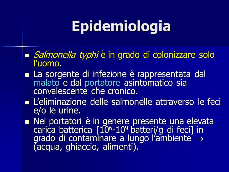 Epidemiologia Salmonella typhi è in grado di colonizzare solo l'uomo.
